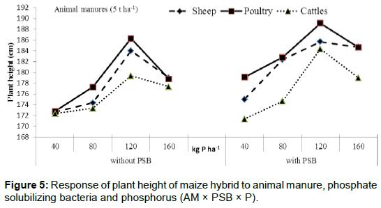 microbial-biochemical-technology-maize-hybrid-bacteria