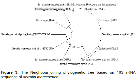 microbial-biochemical-technology-neighbour-joining-phylogenetic