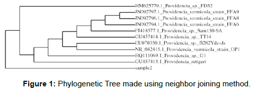 microbial-biochemical-technology-phylogenetic-tree-neighbor