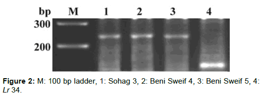 microbial-biochemical-technology-sohag-beni-sweif