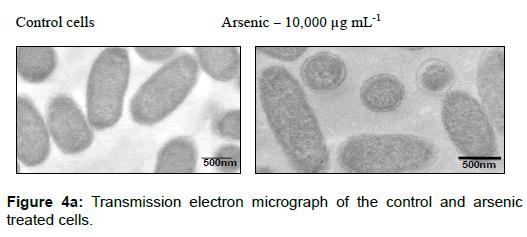 microbial-biochemical-technology-transmission-electron-micrograph