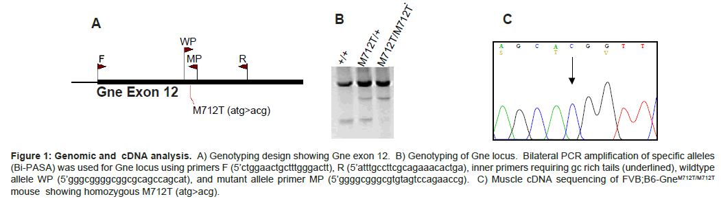 molecular-biology-Genotyping-design-showing
