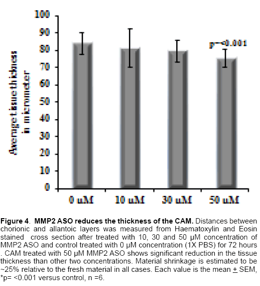 molecular-biology-MMP2-ASO-reduces-thickness