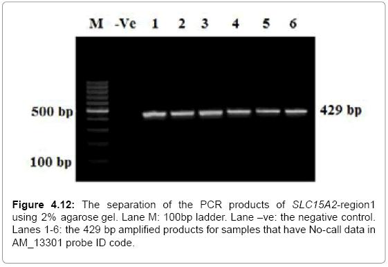 molecular-biology-PCR-products-negative