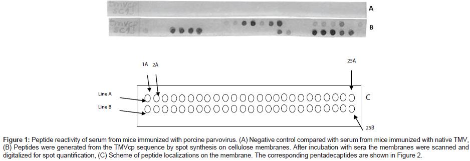 molecular-biology-Peptide-reactivity-serum