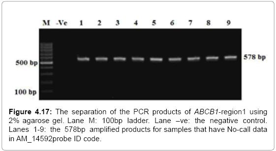 molecular-biology-agarose-amplified-samples
