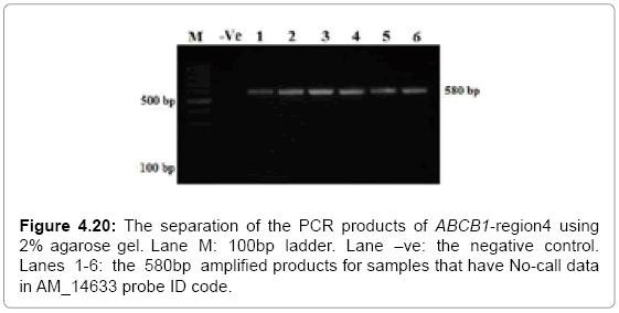 molecular-biology-amplified-probe-code