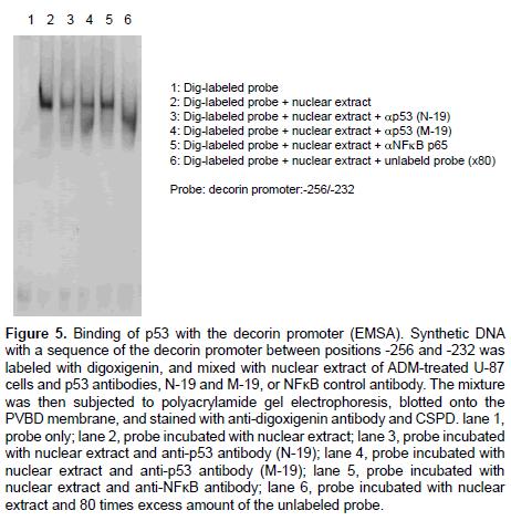 molecular-biology-gel-electrophoresis