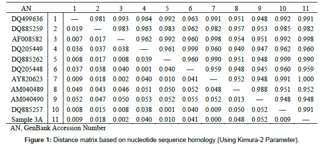 molecular-biology-nucleotide-sequence-homology