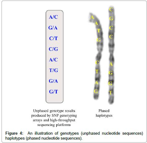 molecular-biology-phased-nucleotide-sequences