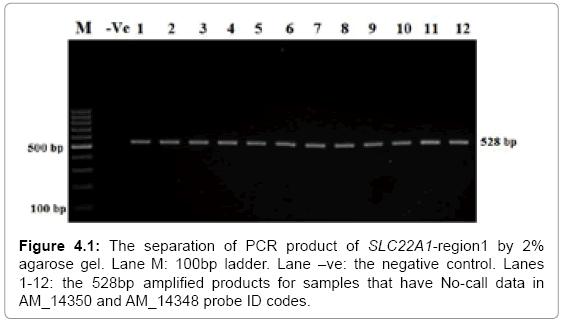molecular-biology-separation-PCR-product-agarose
