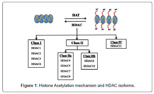 molecular-biomarkers-diagnosis-Acetylation-mechanism