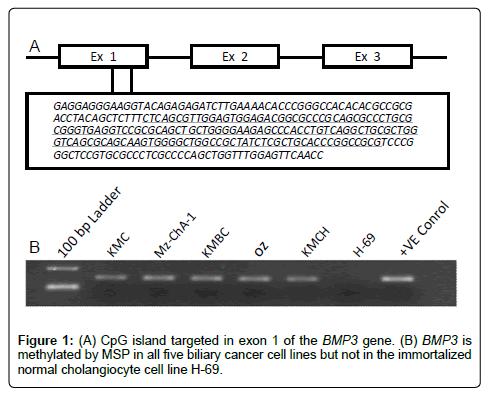 molecular-biomarkers-diagnosis-CpG-island