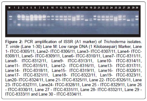 molecular-biomarkers-diagnosis-Kilobasepair