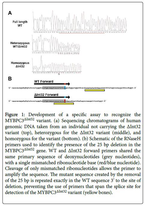 molecular-biomarkers-diagnosis-Sequencing-chromatograms-genomic