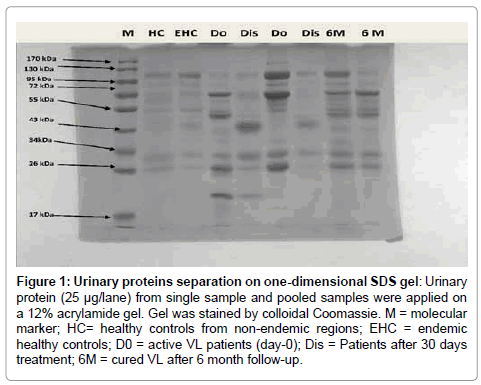 molecular-biomarkers-diagnosis-Urinary-proteins