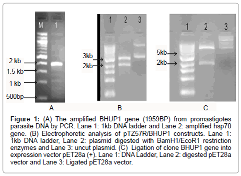 molecular-biomarkers-diagnosis-amplified-BHUP1
