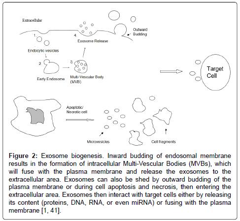 molecular-biomarkers-diagnosis-endosomal-membrane