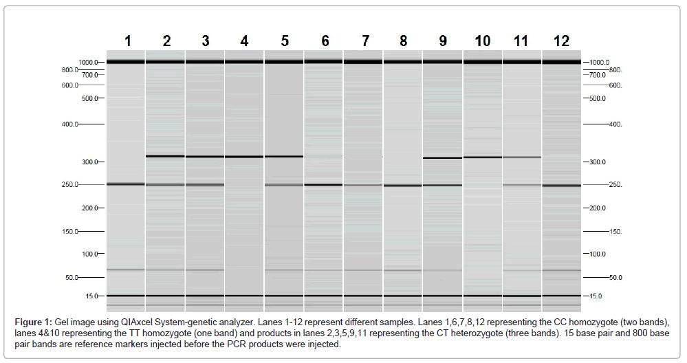 molecular-biomarkers-diagnosis-homozygote