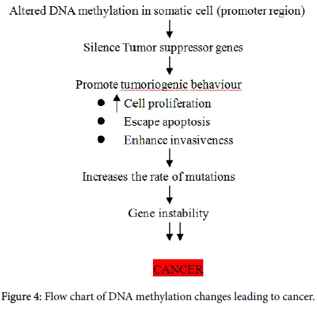 Methylation and breast cancer