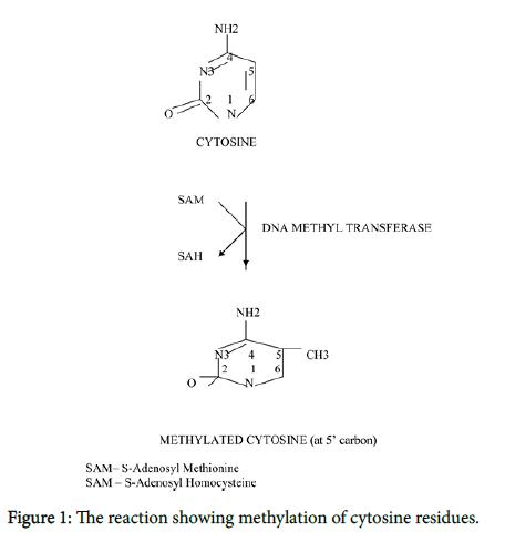reaction-methylation-cytosine