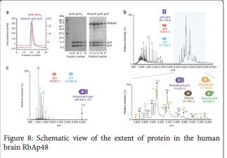 molecular-genetic-extent-protein