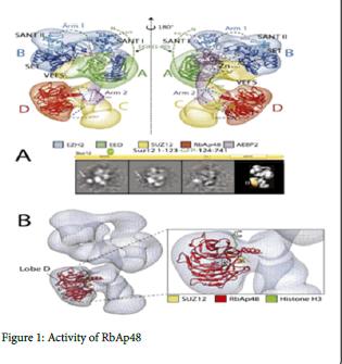 molecular-genetic-medicine-Activity