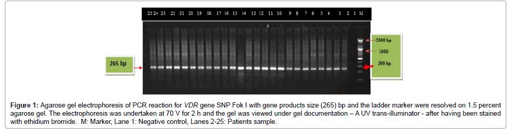 molecular-genetic-medicine-Agarose-gel-electrophoresis-PCR