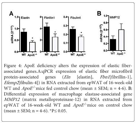 molecular-genetic-medicine-ApoE-deficiency-alters-expression
