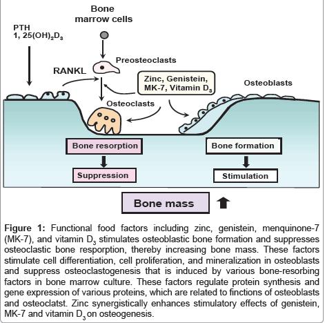 molecular-genetic-medicine-Functional-food-factors