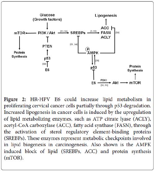 molecular-genetic-medicine-HR-HPV