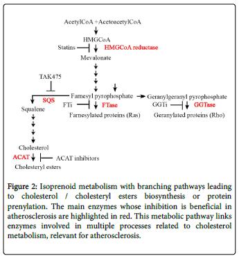 molecular-genetic-medicine-Isoprenoid-metabolism-branching