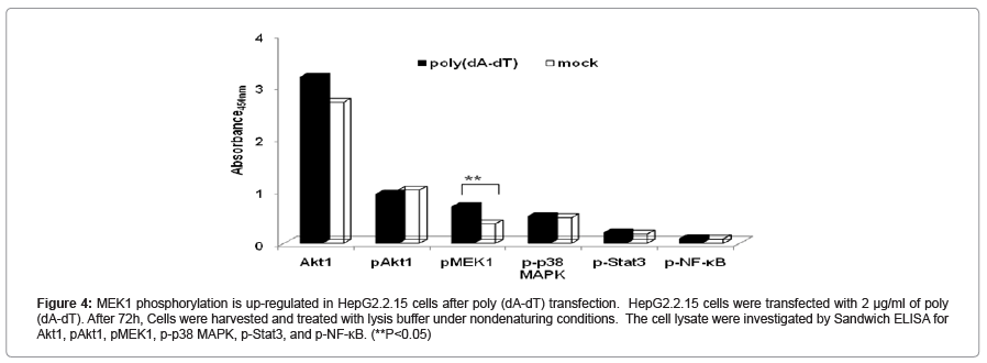 molecular-genetic-medicine-MEK1-phosphorylation-up-regulated