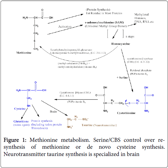 molecular-genetic-medicine-Methionine-metabolism