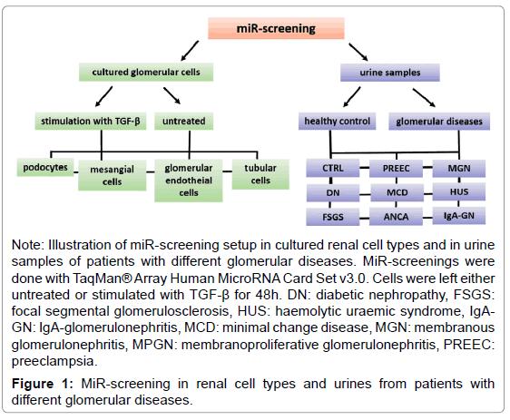 molecular-genetic-medicine-MiR-screening