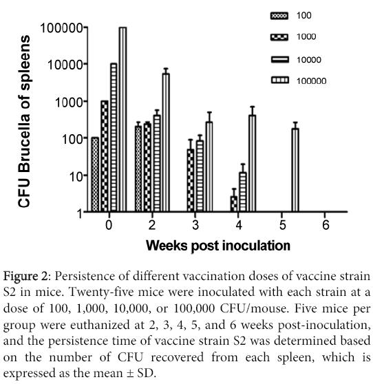 molecular-genetic-medicine-Persistence-different-vaccination-doses