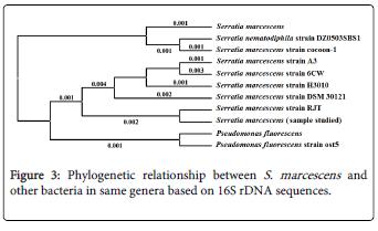 molecular-genetic-medicine-Phylogenetic-bacteria-genera