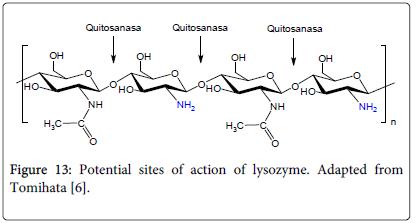 molecular-genetic-medicine-Potential-sites-lysozyme