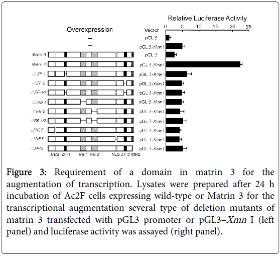 molecular-genetic-medicine-Requirement-domain-matrin