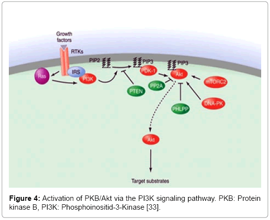 molecular-genetic-medicine-Schemasignaling-pathway