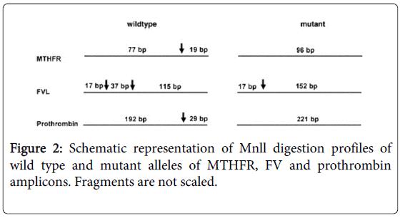 molecular-genetic-medicine-Schematic-representation