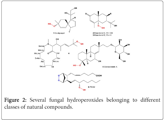 molecular-genetic-medicine-Several-fungal-hydroperoxides