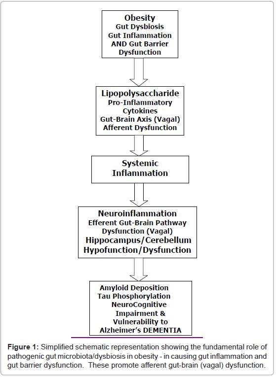 molecular-genetic-medicine-Simplified-schematic-representation