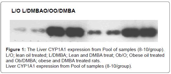 molecular-genetic-medicine-The-Liver-CYP1A1-expression