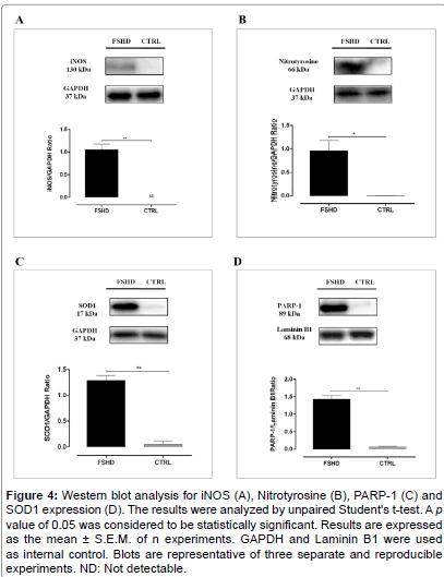 molecular-genetic-medicine-Western-blot-Nitrotyrosine