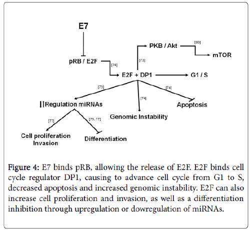 molecular-genetic-medicine-cell-proliferation