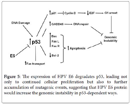 molecular-genetic-medicine-cellular-proliferation
