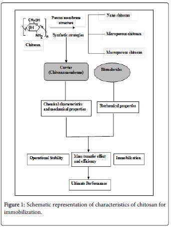 molecular-genetic-medicine-chitosan-immobilization