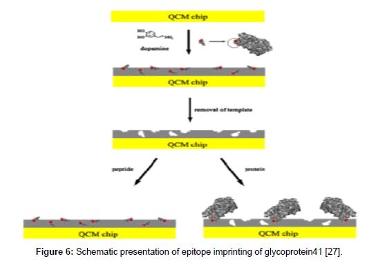 molecular-genetic-medicine-epitope-imprinting