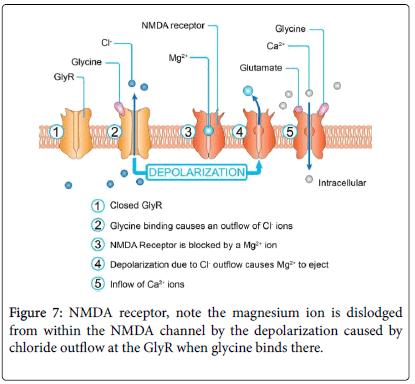 molecular-genetic-medicine-magnesium-ion-depolarization